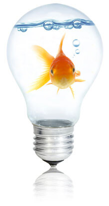 Fish in a light bulb, Fishbowl Inventory Blog