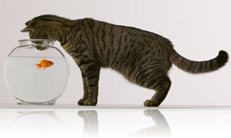 Cat looking into a fishbowl, Fishbowl Inventory Blog
