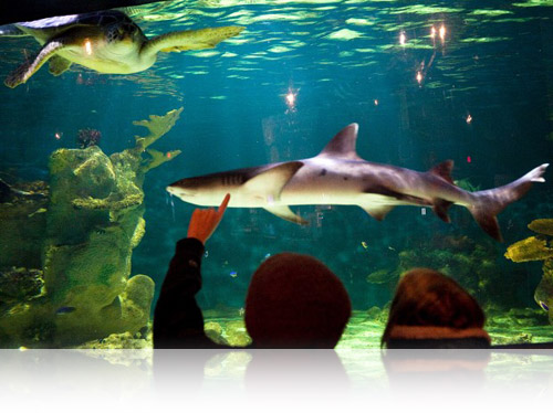 Sharks, turtles, and other animals live at The Living Planet Aquarium, Fishbowl Inventory Blog